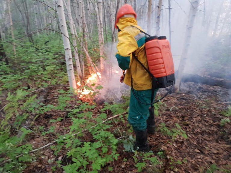 декариса о лесных пожарах в якутии фото незалежной
