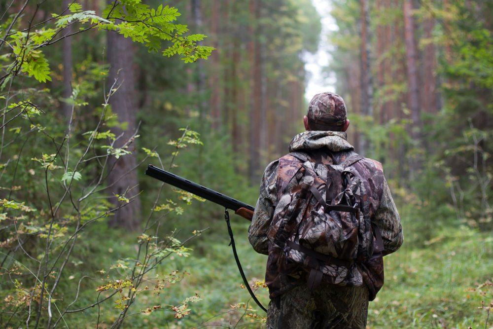 Ограничения на охоту в «зелёных зонах» и на сельхозземлях могут отменить