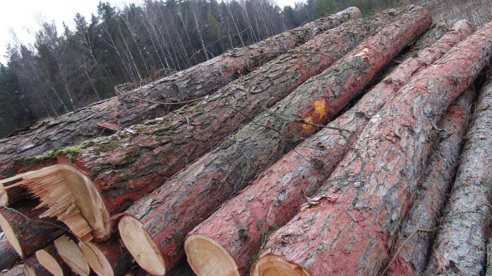 С 1 января 2022 года запретят вывозить из страны необработанные лесоматериалы