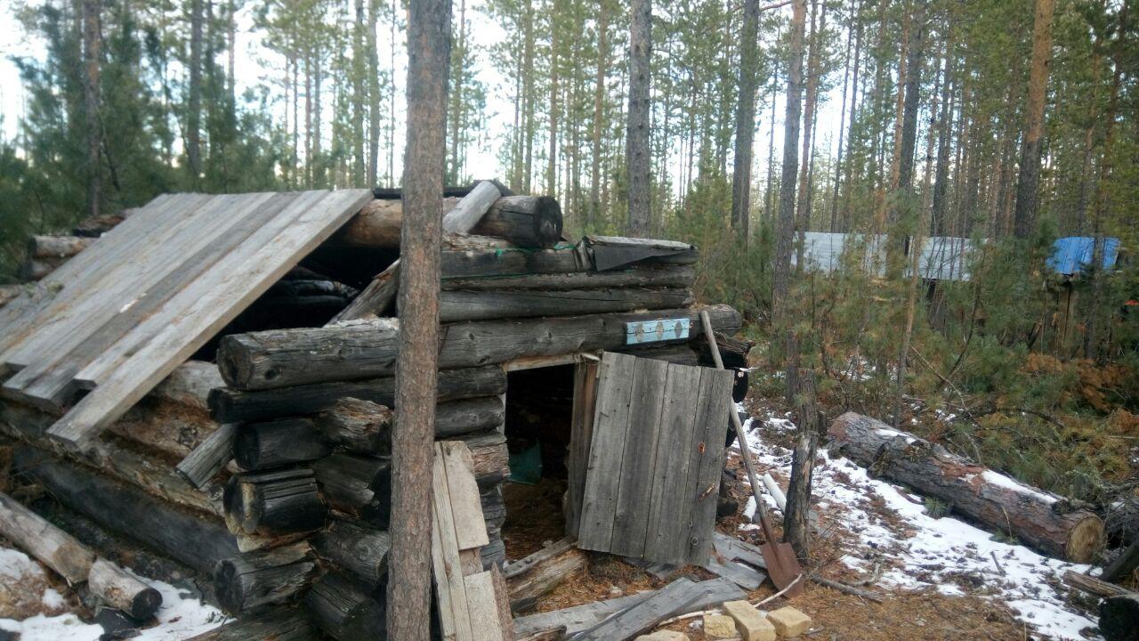 ВЯкутии спасли 5 дней блуждавшего потайге лесоруба