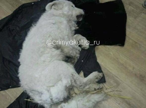 ВМВД Якутии заступилось за владельца «погибшей нахолоде» собаки