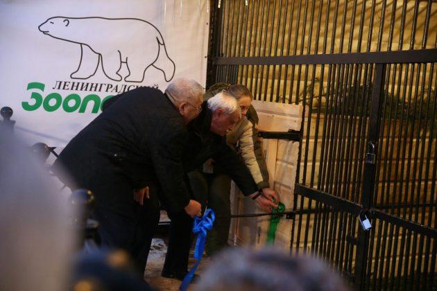 13-630x420 Внучка вернулась к бабушке: Хаарчаану официально передали Ленинградскому зоопарку