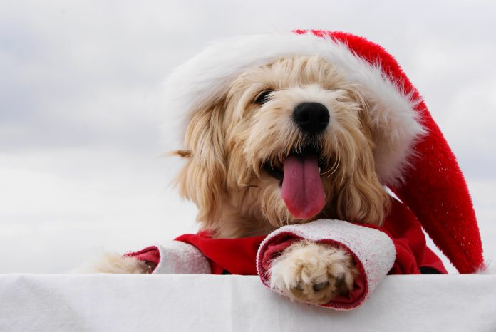 Christmas_Dogs_511340-696x466 Что готовит нам год Собаки: Гороскоп по знакам зодиака