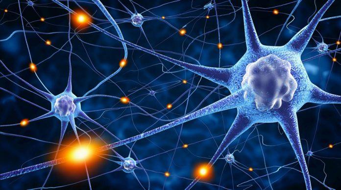 144-696x387 Ученые: Клетки мозга восстанавливаются даже у самых пожилых людей
