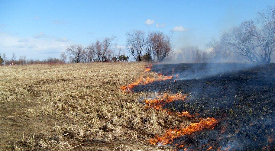 Профилактические выжигания сухой травы в Якутии будут проводиться по спецметодике