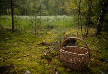 Выживешь ли ты в лесу?