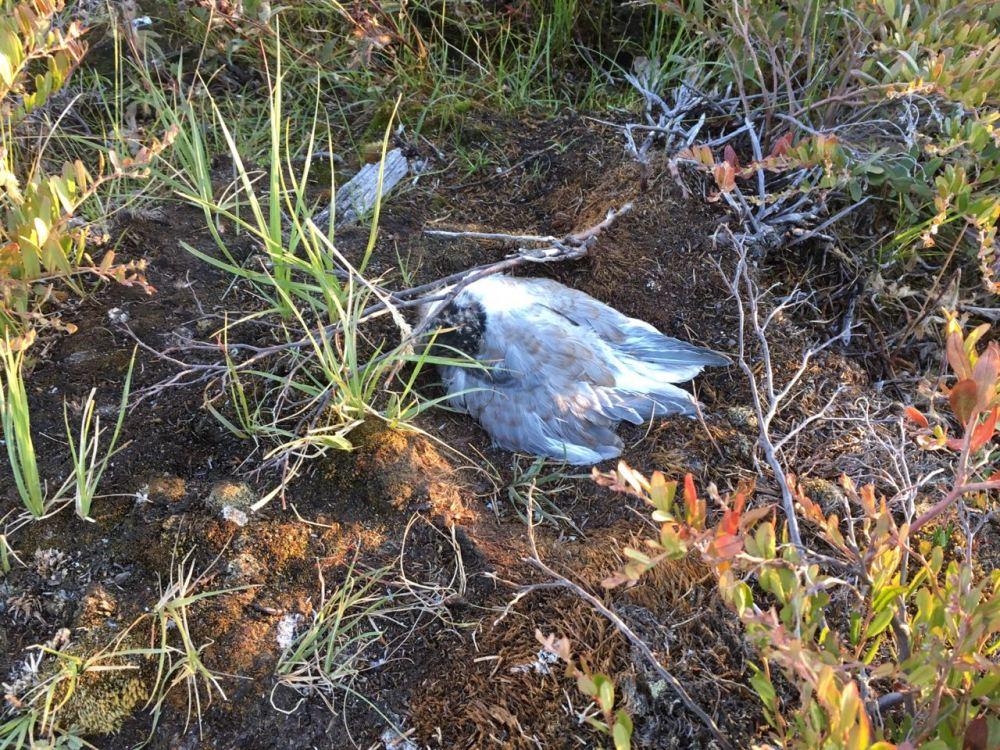 В Верхоянье выехали специалисты для проверки причины массовой гибели птиц