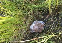 В Якутске исследуют пробы с места массовой гибели птиц в Верхоянском улусе