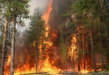 28 июля локализован крупный пожар в Намском районе