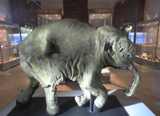 На ВЭФ презентуют научный центр клонирования мамонтов