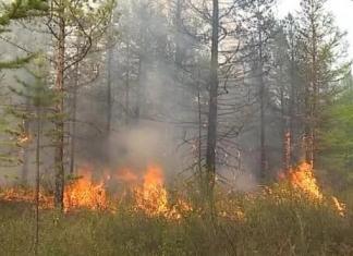 На 5 августа в республике действует 25 лесных пожаров в девяти районах