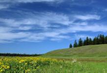 Одобрена 9,1 тысяч заявлений на «дальневосточный гектар» в Якутии