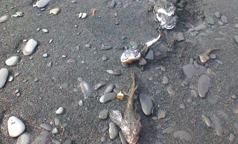 В рыбе, погибшей в Булунском районе, не нашли токсичных веществ
