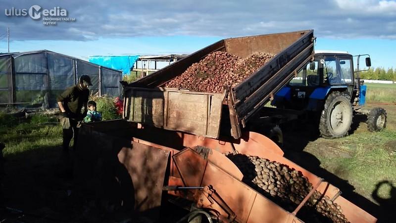 В Томпонском улусе семья фермеров Захаровых планирует собрать 125 тонн картофеля