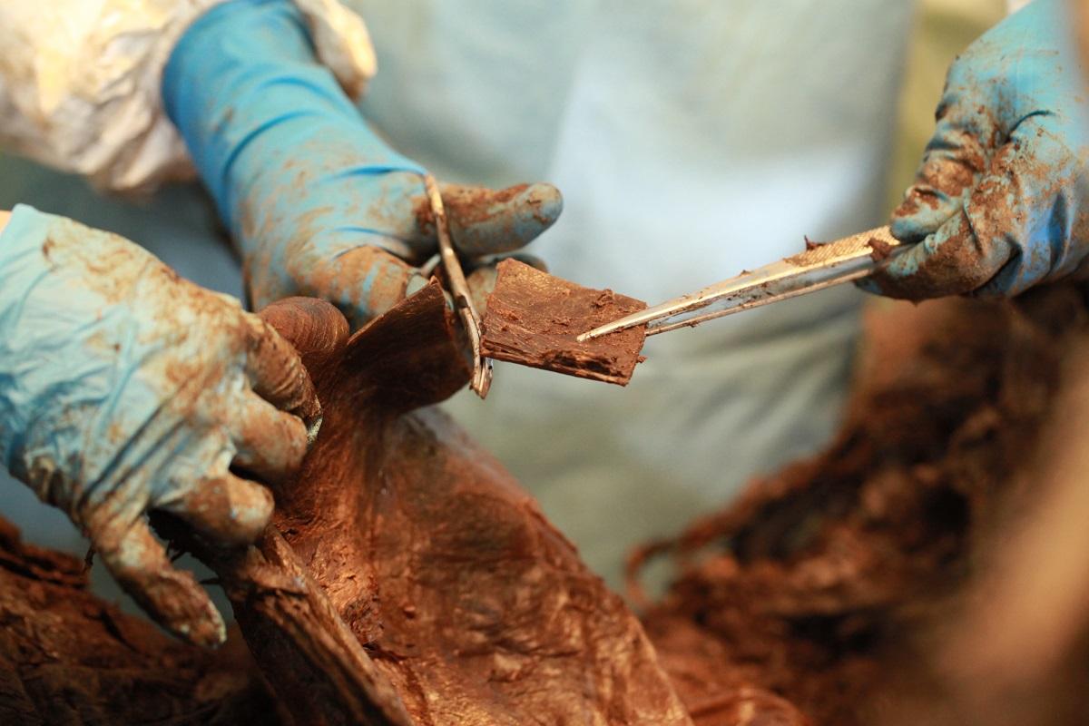 Учеными СВФУ найден скелет мамонта с мягкими тканями