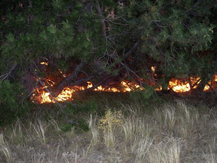 На 31 августа в Якутии действует 20 природных пожаров