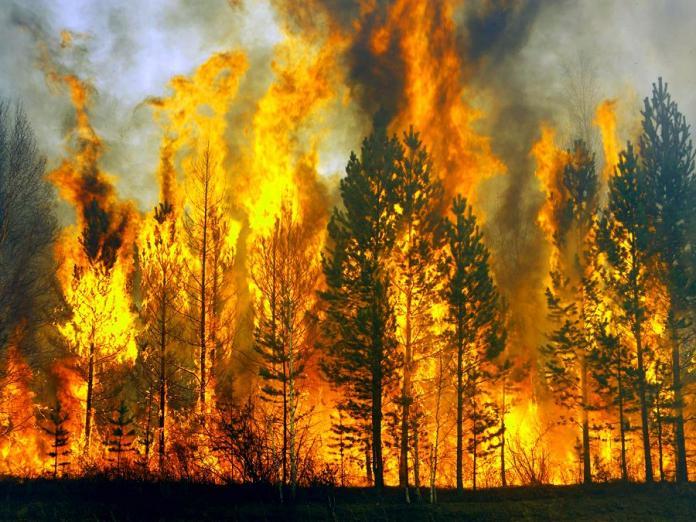 С начала сезона в Якутии потушили 167 лесных пожаров