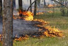 Лесные пожары нанесли Якутии ущерб на 90,5 млн рублей