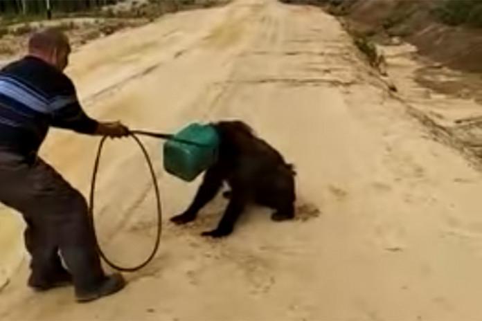 В Якутии разыскивают медведя с канистрой на голове
