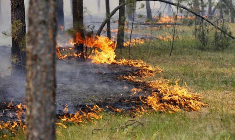 Не потушил окурок. На жителя Якутии завели уголовное дело за лесной пожар