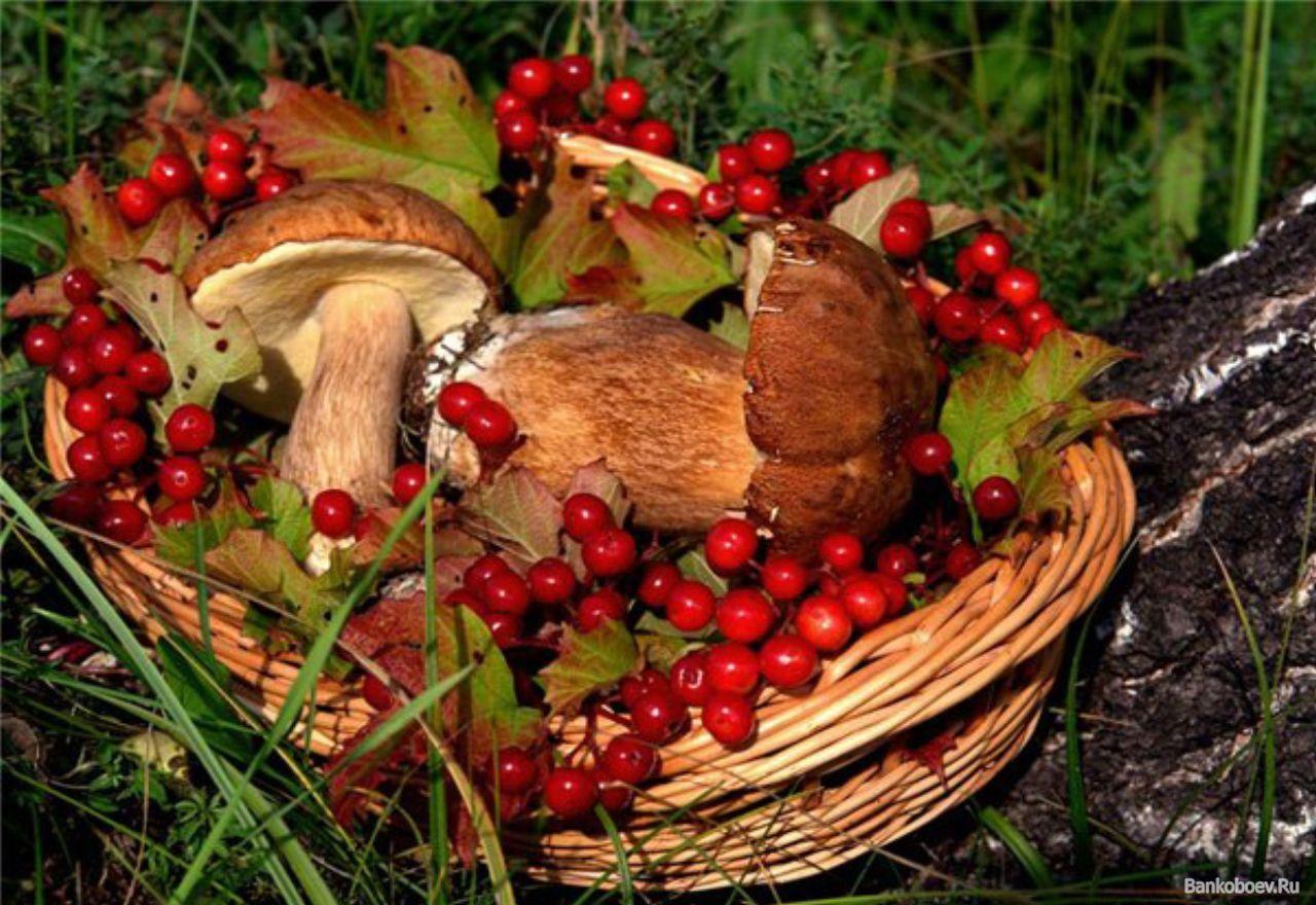 Грозят ли якутянам штрафы за сбор грибов и ягод?