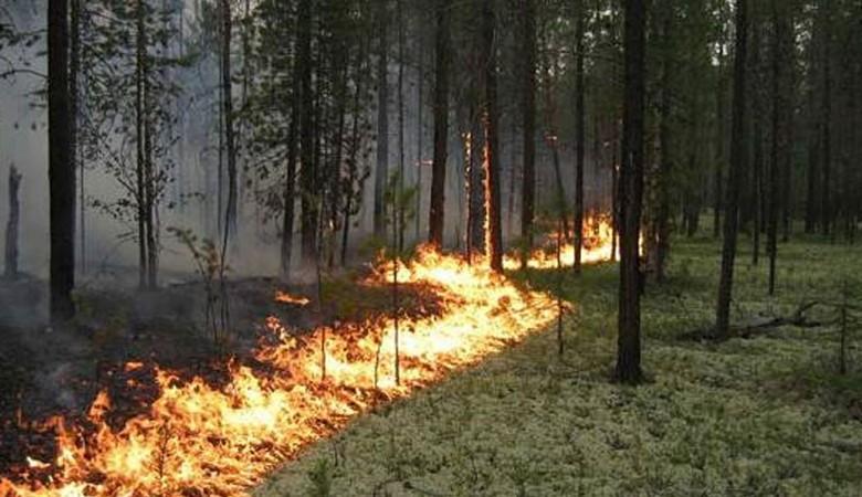 На утро 1 сентября в Якутии действует 17 природных пожаров
