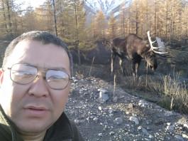 В Якутии ищут лося, запутавшегося в оптоволокне