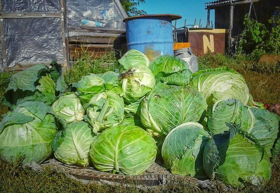 В Якутии подготовили первых сити-фермеров