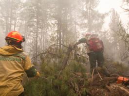 Почему горели леса в Якутии этим летом?