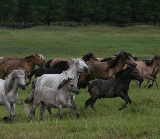 Ранее судимый ленчанин украл лошадь