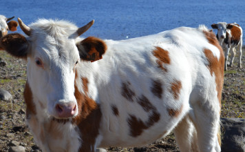 Экологи исследуют животных, попавших в зону загрязнения при прорыве дамбы