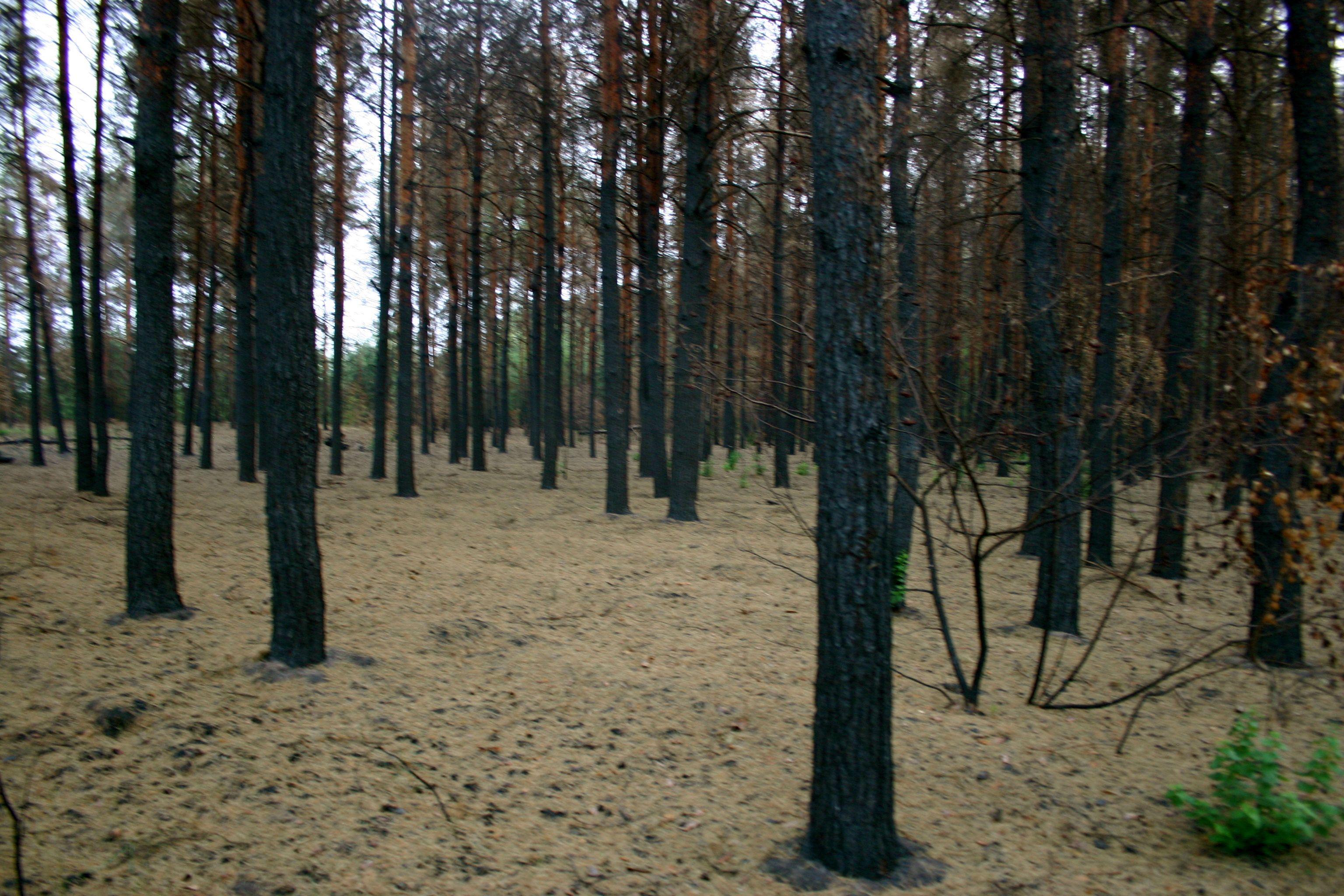 Леса Якутии после пожаров начали исследовать на болезни и вредителей