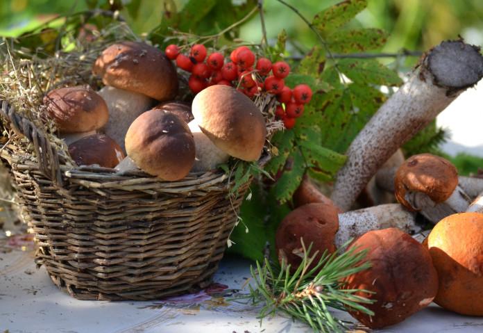 В Якутии возродят заготовительные конторы по сбору грибов и ягод