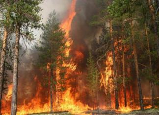 За лесные пожары главу Олекминского района оштрафовали на десять тысяч рублей