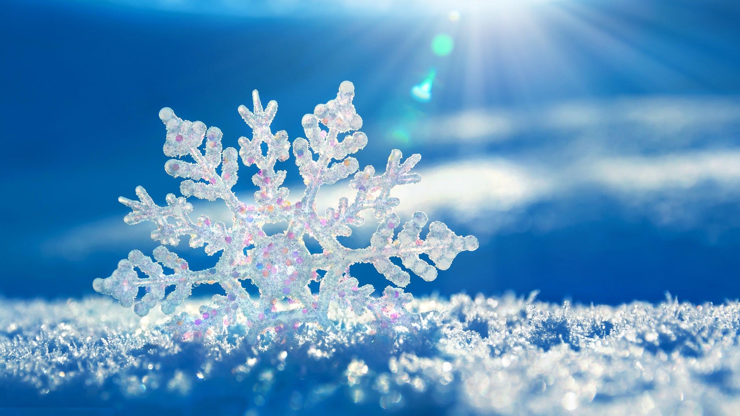 Народный синоптик Тускул предсказал теплую зиму