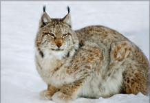 За 44 года количество животных на планете сократилось на 60%