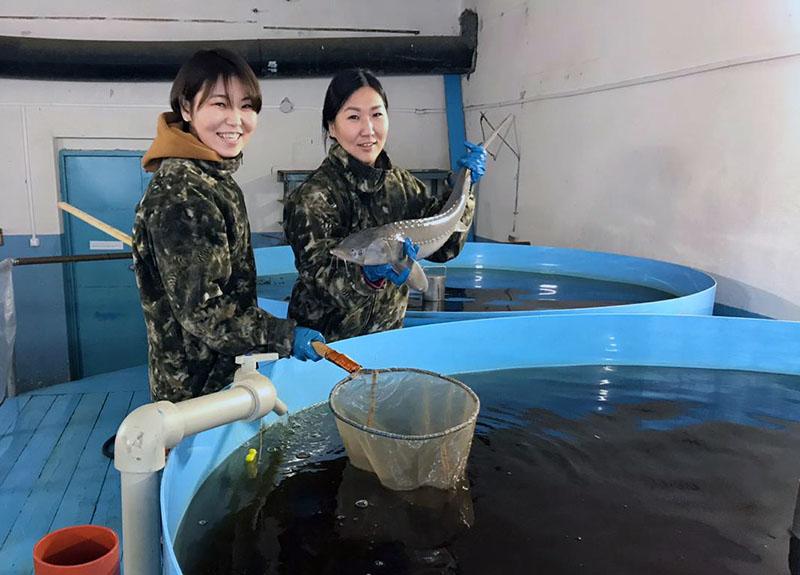 Вот так рыба: Как восстанавливается Чернышевский рыбоводный завод