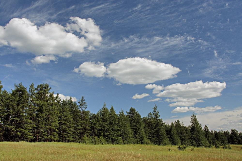 Якутия получит 870 млн рублей на защиту лесов