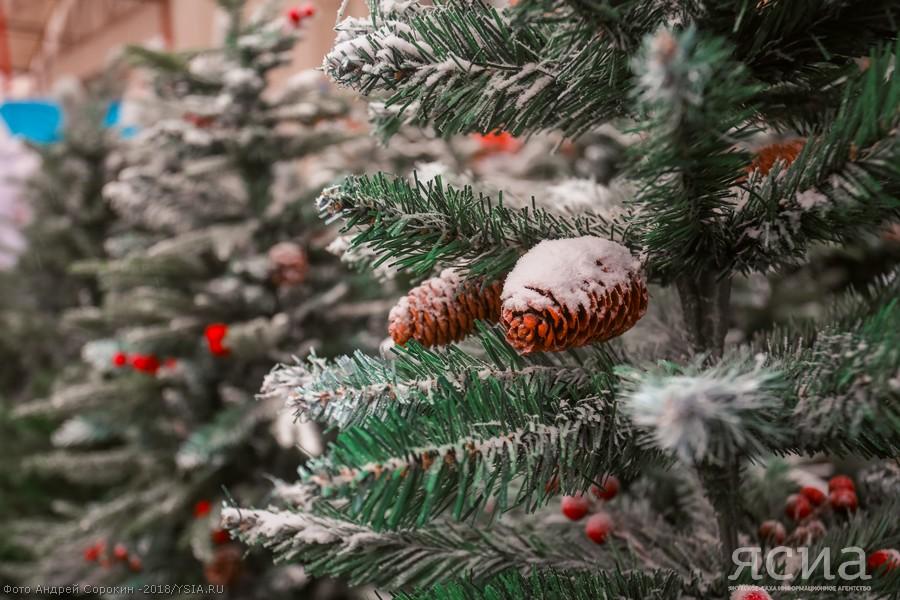 Почем елки в Новый год?