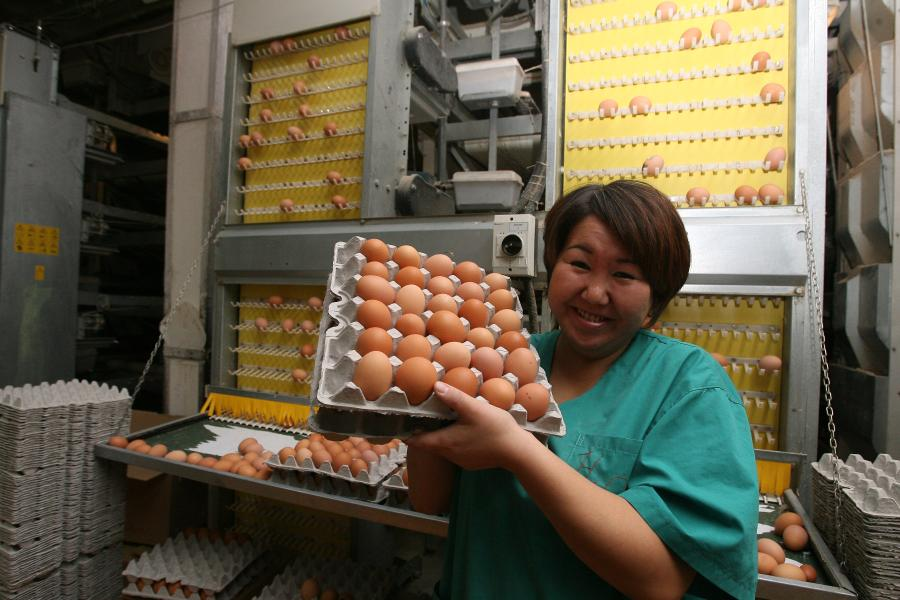 Якутская птицефабрика увеличит объемы производства