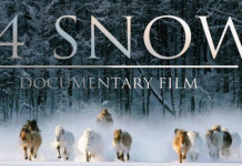 В Мурманске ищут якутских кинематографистов, выигравших Гран-при международного фестиваля
