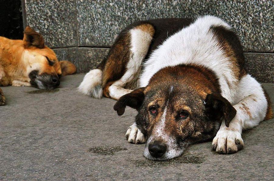 Что изменит новый закон о защите животных