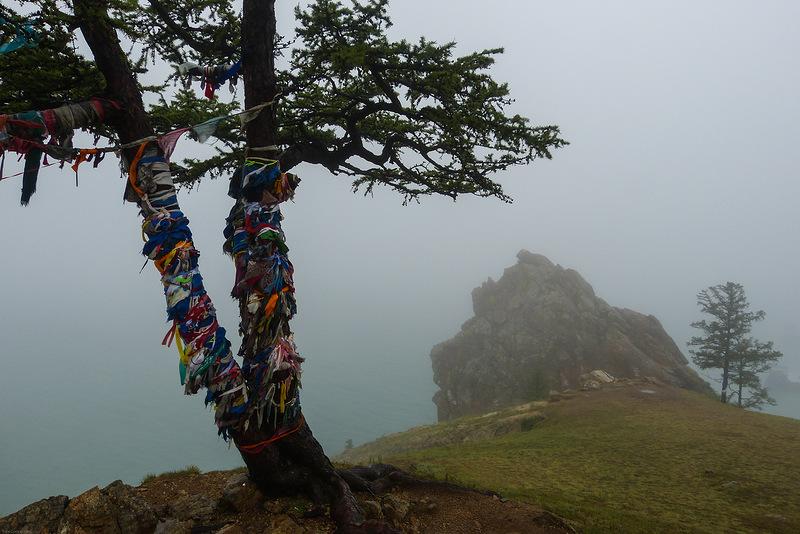 """Проект """"Священные деревья Якутии"""" запустит Русское географическое общество"""