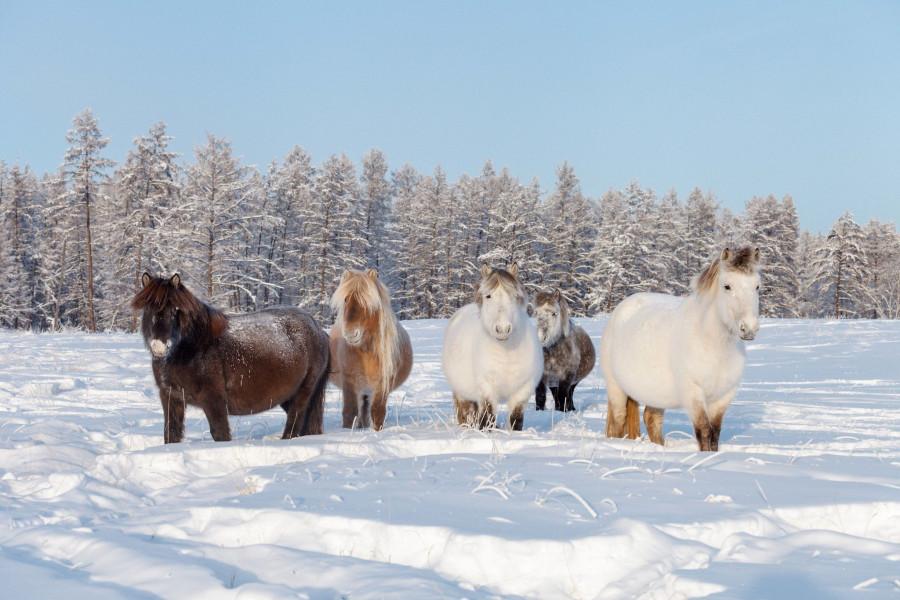 За 18 лет поголовье лошадей в республике увеличилось более чем на 50 тысяч
