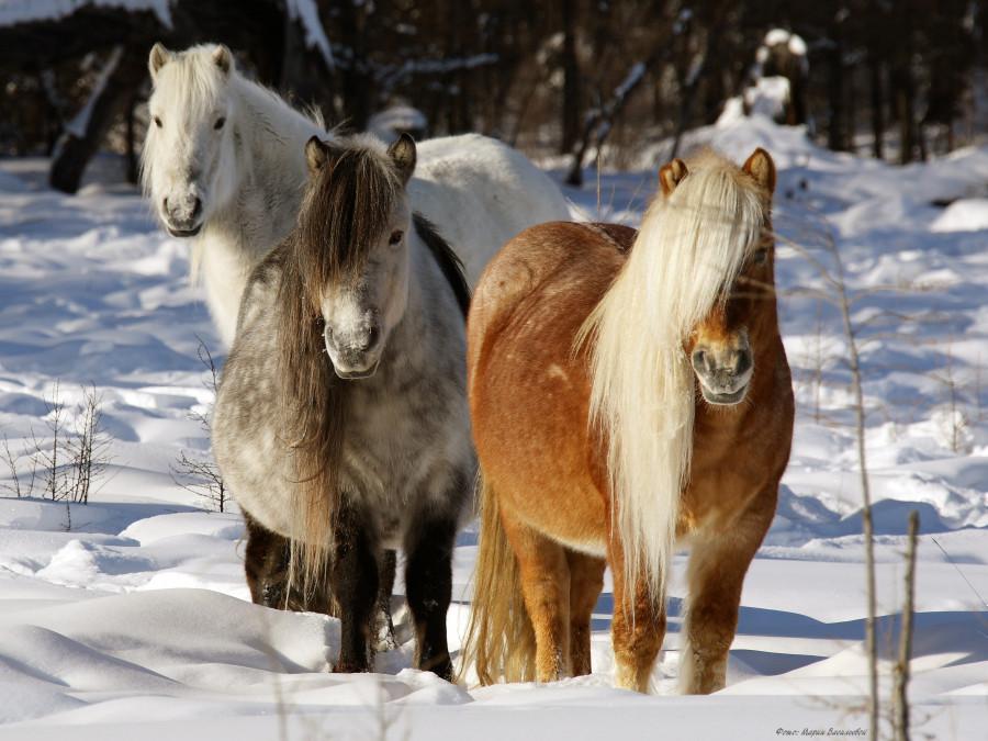 Александр Атласов: К 2024 году поголовье лошадей должно быть увеличено до 209 тысяч