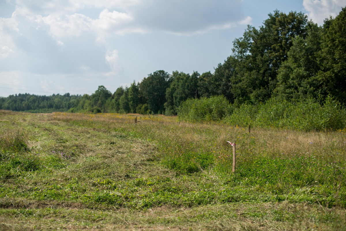 Мэрия Якутска просит граждан быть внимательными при покупке земельных участков
