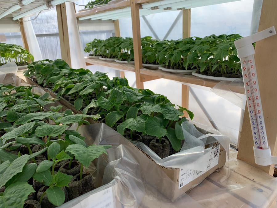 Золотодобытчики Алдана осваивают гидропонику для выращивания овощей
