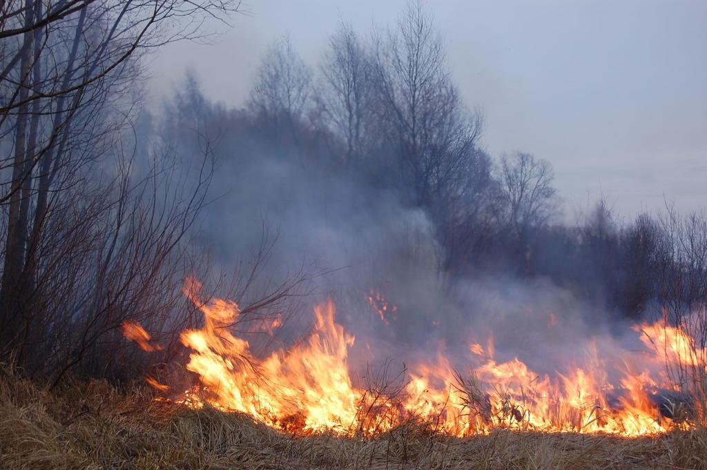 Специалисты назвали предварительные причины пожаров в Забайкалье