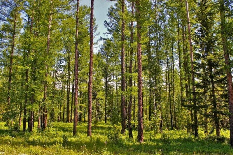 В 2021 году от насекомых-вредителей обработают в три раза больше лесов