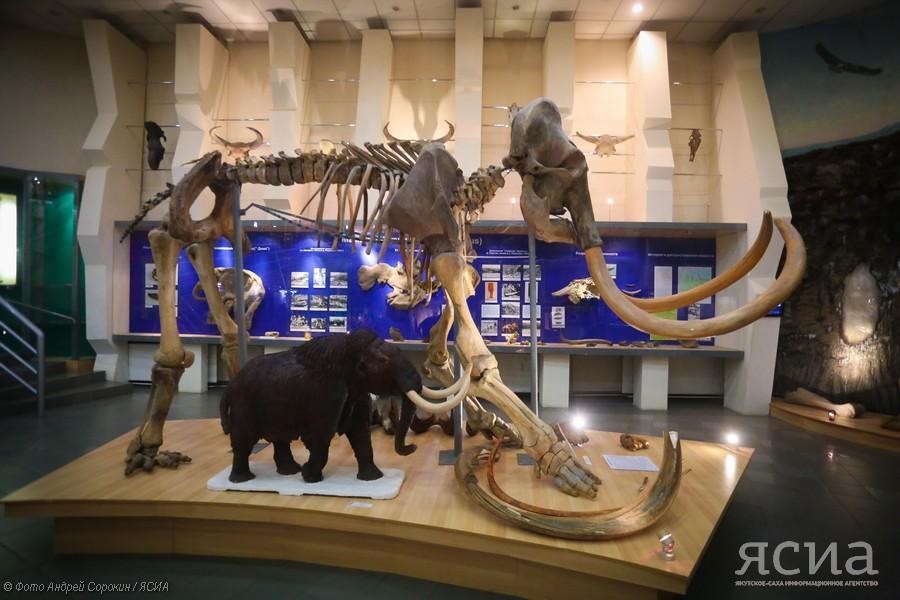 Панорамная видеоэкскурсия: Музей мамонта Якутии в формате 360°